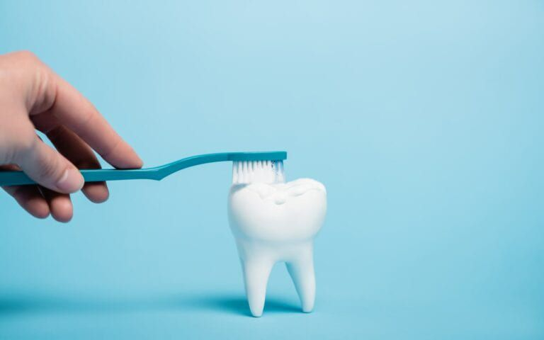 Hand brushing tooth model